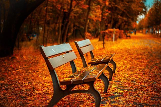 Podzim v parku.jpg